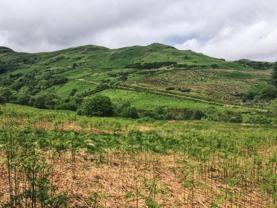 beinn an tuirc kintyre gin tree planting scheme